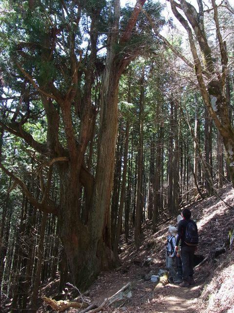武甲山ガイド(4月30日)【登山口ナビ】