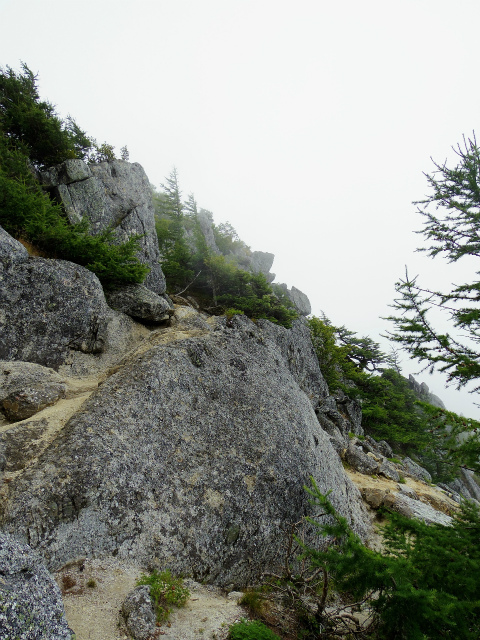 鳳凰三山(広河原~白鳳峠・高嶺)登山口コースガイド 赤抜沢ノ頭への稜線【登山口ナビ】