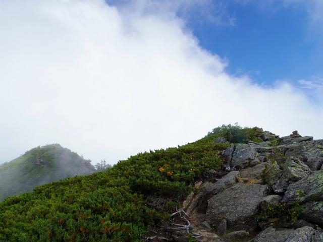 鳳凰三山(広河原~白鳳峠・高嶺)登山口コースガイド 高嶺の双峰【登山口ナビ】