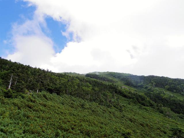 鳳凰三山(広河原~白鳳峠・高嶺)登山口コースガイド 白鳳峠のゴーロからの高嶺【登山口ナビ】