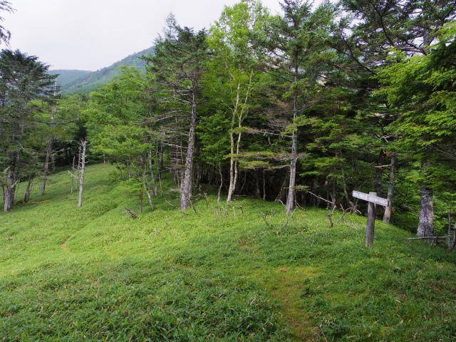 辻山(甘利山~千頭星山)登山口コースガイド 大ナジカ峠【登山口ナビ】