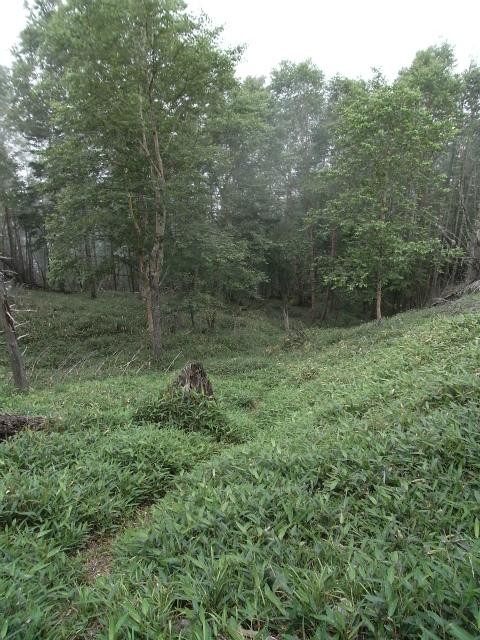辻山(甘利山~千頭星山)登山口コースガイド 大ナジカ峠の笹薮【登山口ナビ】