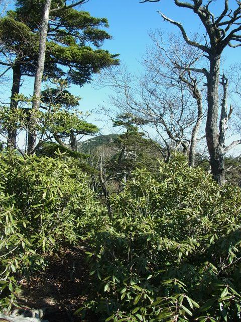 笠取山~唐松尾山~御殿岩 登山口コースガイド シャクナゲの群生するピーク【登山口ナビ】