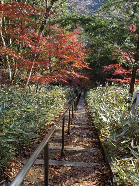 石割山(石割神社) 登山口コースガイド 表参道階段400段【登山口ナビ】