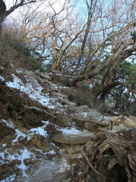天城山(万二郎岳~万三郎岳周回)登山口コースガイド 万三郎岳山頂直下の急登【登山口ナビ】