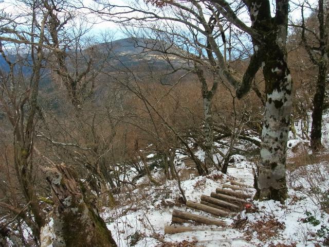 天城山(万二郎岳~万三郎岳周回)登山口コースガイド シャクナゲコース階段【登山口ナビ】