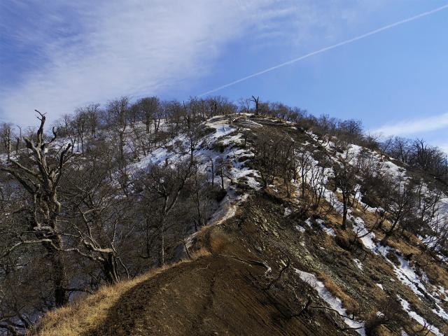 檜洞丸(日陰沢~犬越路コース) 登山口コースガイド 山頂西側【登山口ナビ】