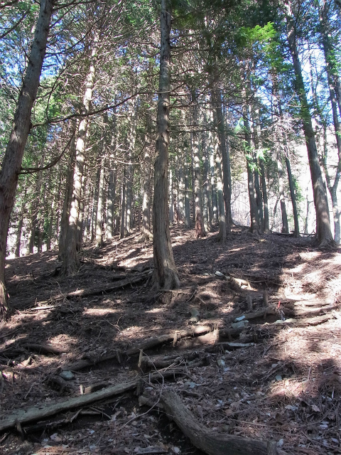 大室山(日陰沢新道コース) 登山口コースガイド 植林帯の急登【登山口ナビ】
