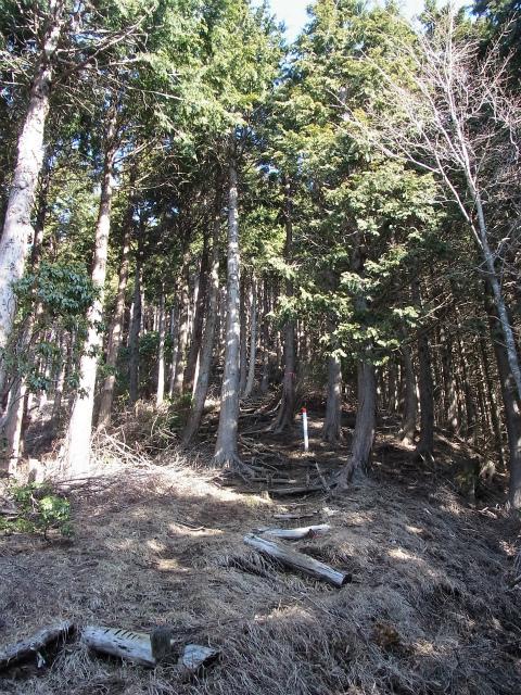 大室山(日陰沢新道コース) 登山口コースガイド 階段【登山口ナビ】