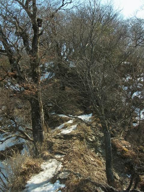檜洞丸(日陰沢~犬越路コース) 登山口コースガイド 大笄の急登 【登山口ナビ】