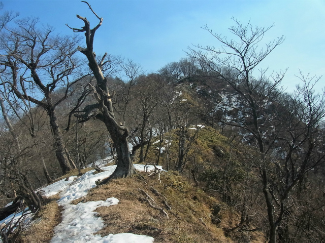 檜洞丸(日陰沢~犬越路コース) 登山口コースガイド 大笄の稜線【登山口ナビ】