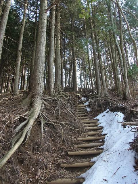 檜洞丸(日陰沢~ヤタ尾根コース) 登山口コースガイド 急登【登山口ナビ】