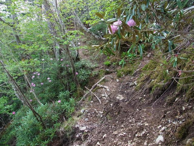 和名倉山(三ノ瀬~東仙波)登山口コースガイド 小ピークの巻き道【登山口ナビ】