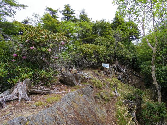 和名倉山(三ノ瀬~東仙波)登山口コースガイド 西仙波山頂【登山口ナビ】