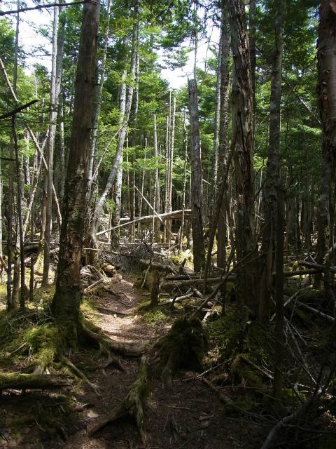 和名倉山(三ノ瀬~東仙波)登山口コースガイド 山頂の倒木帯 【登山口ナビ】