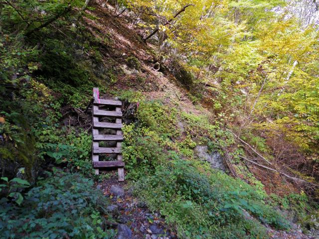 両神山(日向大谷・七滝沢ルート)登山口コースガイド 梯子【登山口ナビ】