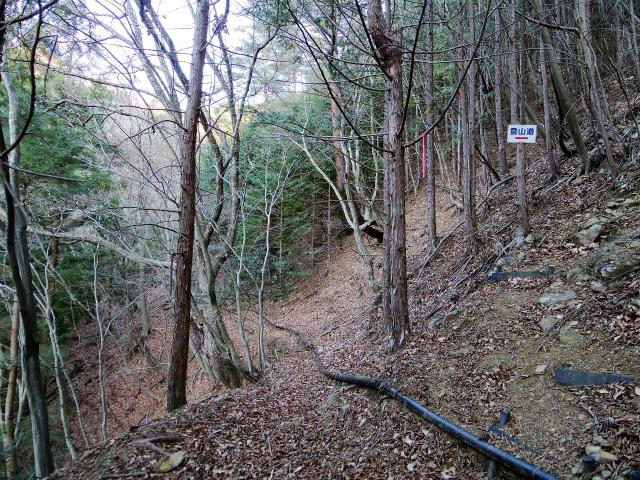 三ツ峠山(本社ヶ丸~清八山) 登山道分岐【登山口コースガイド】