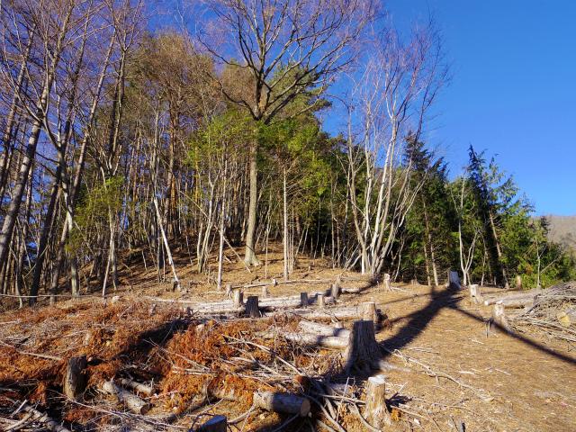 三ツ峠山(本社ヶ丸~清八山) 鉄塔のピーク【登山口コースガイド】