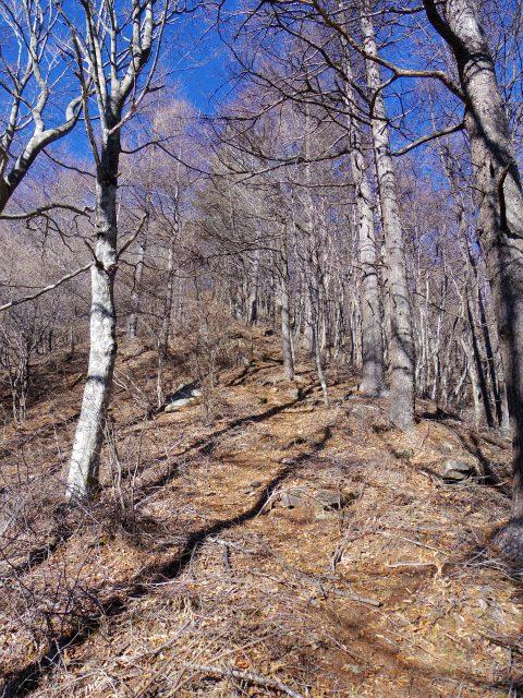 三ツ峠山(本社ヶ丸~清八山) 急登区間【登山口コースガイド】