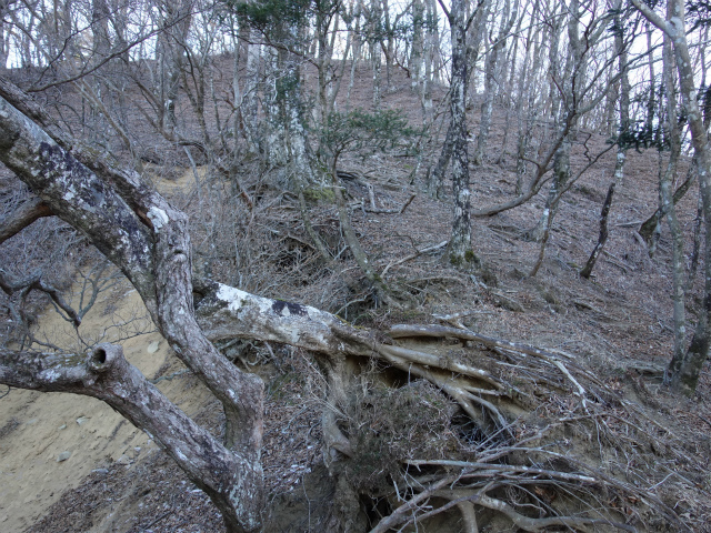丹沢山(早戸大滝~丹沢三峰)コースガイド 崩壊地上部【登山口ナビ】