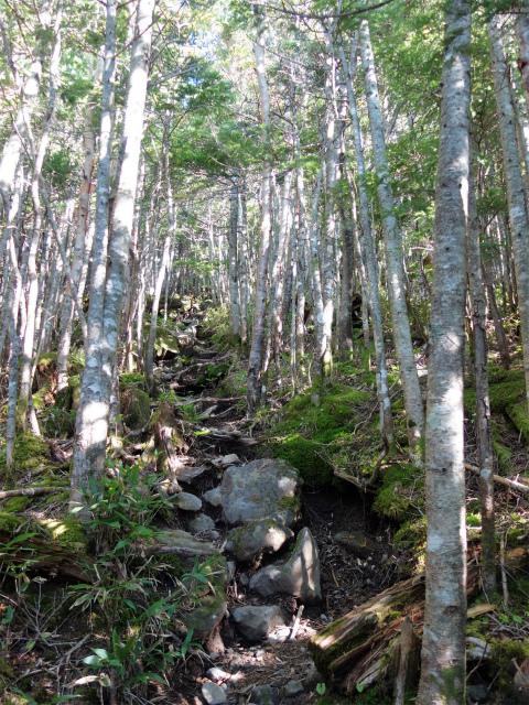 八ヶ岳・赤岳(県界尾根) 登山口コースガイド 尾根への急登【登山口ナビ】