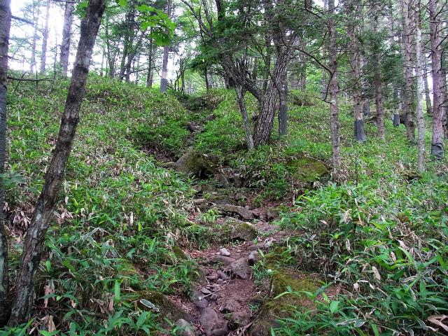 赤岳(八ヶ岳)・真教寺尾根 登山口コースガイド 笹原の登り【登山口ナビ】