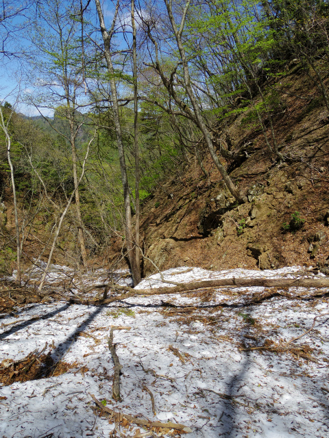 両神山(八丁峠コース) 登山口コースガイド 下山作業道【登山口ナビ】