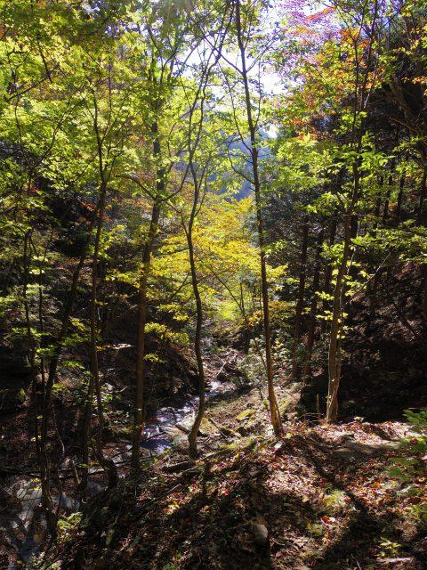 赤岩岳(赤岩尾根) 登山口コースガイド 八丁峠コース【登山口ナビ】