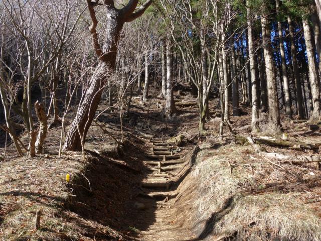 塔ノ岳(丹沢表尾根) 登山口コースガイド 階段【登山口ナビ】