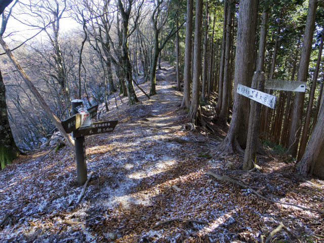 塔ノ岳(長尾尾根) 登山口コースガイド 境沢分岐【登山口ナビ】