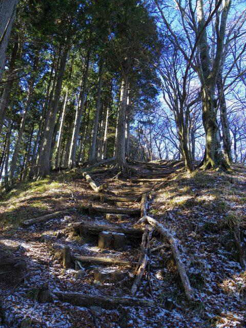 塔ノ岳(長尾尾根) 登山口コースガイド【登山口ナビ】