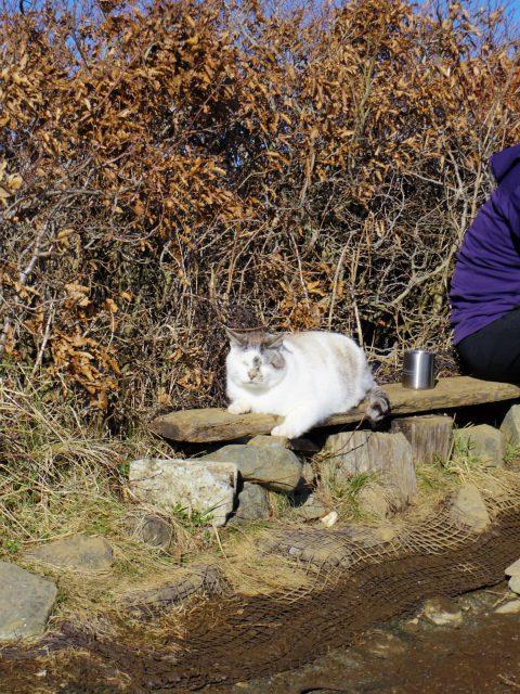 塔ノ岳(長尾尾根) 登山口コースガイド 山頂猫【登山口ナビ】