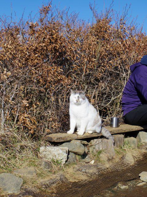 塔ノ岳(丹沢表尾根) 登山口コースガイド 山頂猫【登山口ナビ】