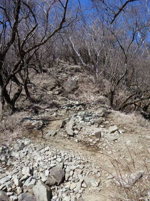 塔ノ岳(丹沢表尾根) 登山口コースガイド 山頂直下の急登【登山口ナビ】