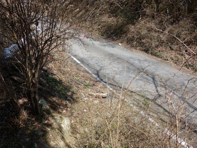 三ノ塔(二ノ塔尾根)登山口コースガイド 表丹沢林道横断地点【登山口ナビ】