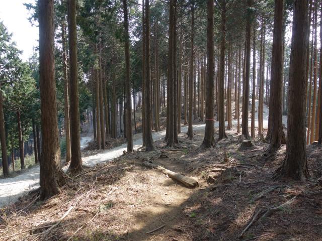 三ノ塔(二ノ塔尾根)登山口コースガイド 三ノ塔尾根の森林整備作業道【登山口ナビ】