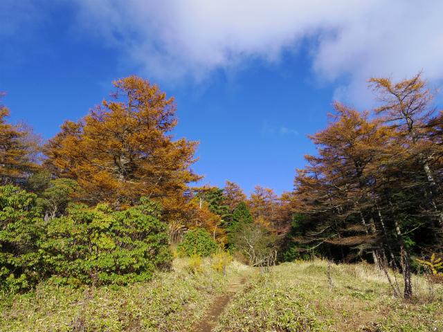 蛭ヶ岳(榛ノ木丸~姫次)コースガイド 東海自然歩道【登山口ナビ】