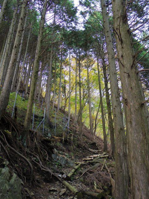 塔ノ岳(政次郎尾根・天神尾根) 登山口コースガイド【登山口ナビ】