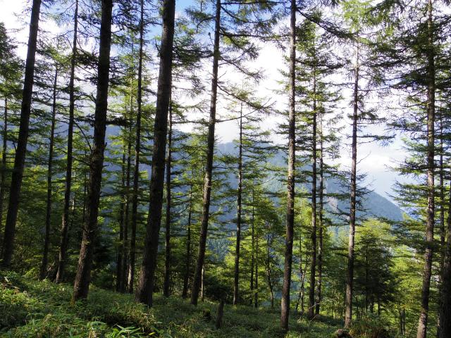 鳳凰三山(青木鉱泉~中道コース) 燕頭山の稜線【登山口コースガイド】