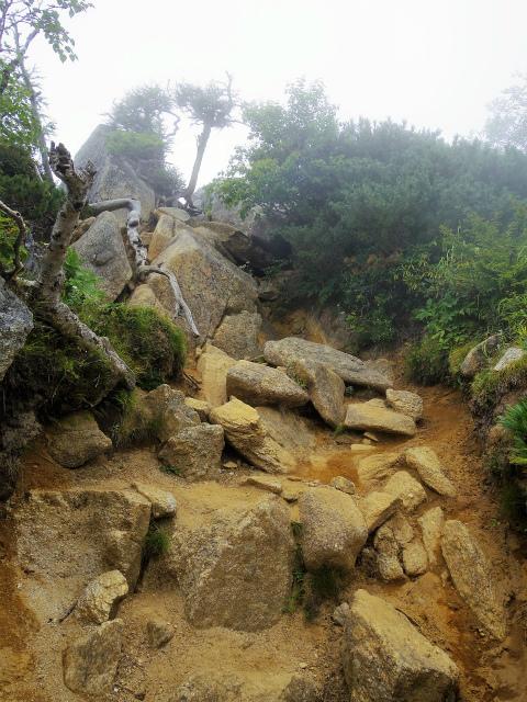 鳳凰三山(青木鉱泉~中道コース) 赤抜沢ノ頭への急登【登山口コースガイド】