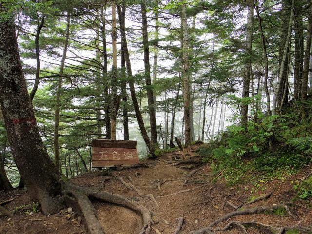 鳳凰三山(青木鉱泉~ドンドコ沢コース) 五色滝分岐【登山口コースガイド】