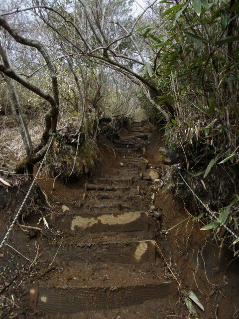 金時山(金時神社コース) 階段の登り【登山口コースガイド】
