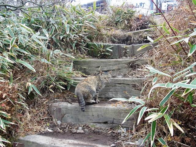 金時山(金時神社コース)登山口コースガイド 山頂の猫【登山口ナビ】