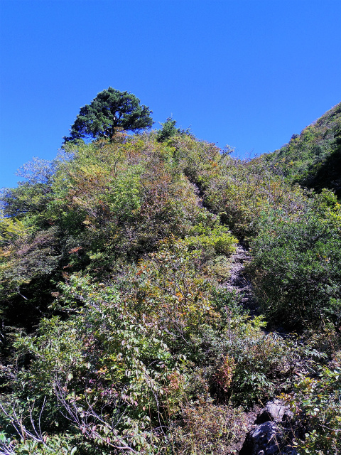 八海山(屏風道~新開道)五合目【登山口コースガイド】