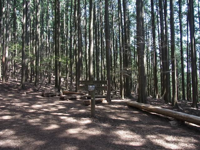 武甲山(表参道コース) 登山口コースガイド 大杉のベンチ【登山口ナビ】
