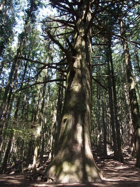 武甲山(表参道コース) 登山口コースガイド 大杉【登山口ナビ】