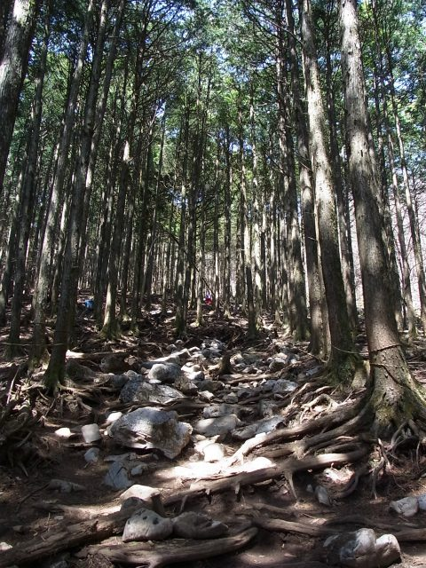 武甲山(表参道コース) 登山口コースガイド【登山口ナビ】