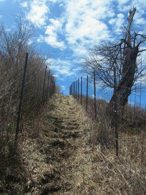 蛭ヶ岳(雷滝~市原新道)コースガイド 山頂直下【登山口ナビ】