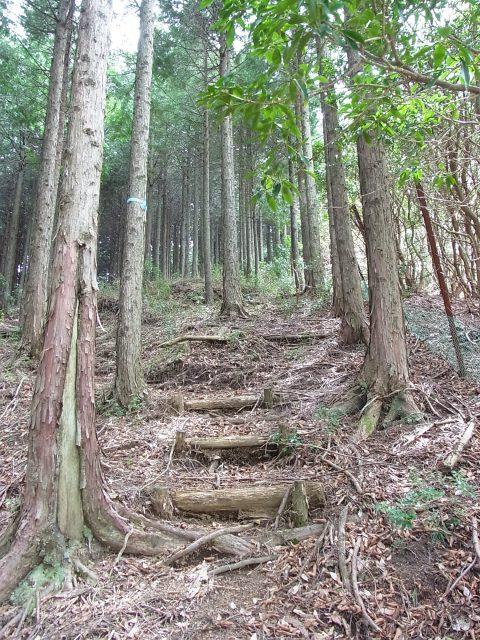 蛭ヶ岳(白馬尾根~鬼ヶ岩)コースガイド 鹿柵沿いの階段【登山口ナビ】