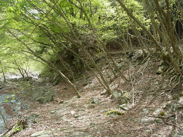 蛭ヶ岳(白馬尾根~鬼ヶ岩)コースガイド 雷平分岐【登山口ナビ】